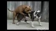 Куче Повръща Повреме На Секс