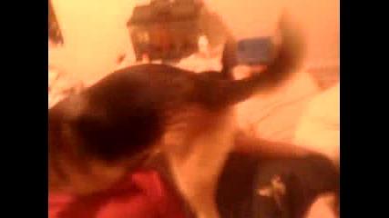 Куче Се Възползва От Пияно Момиче