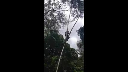 70 годишен дядо се катери по дърветата.