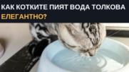 Как котките пият вода толкова елегантно?