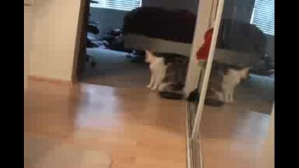 Телепортираща се котка 2 (нинджа стил) :d