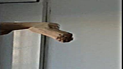 Папагалът Джоко