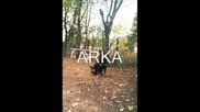 Jagdterriers In Bulgaria(ferma Vom Valven)
