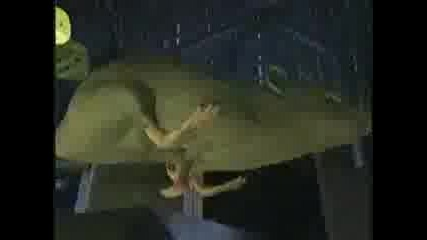 Beast Wars - A Better Mousetrap (season 1)