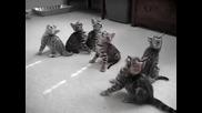 Забавните Бенгалски Котенца