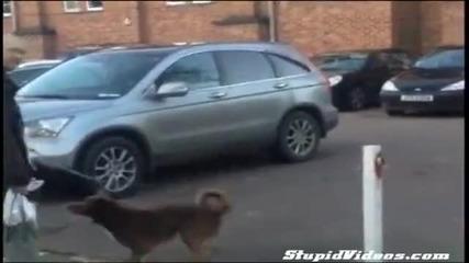 Това куче ще ви изуми !!