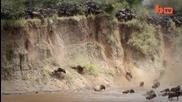 Екстремно пресичане на река от животни