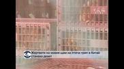 Жертвите на новия щам на птичи грип в Китай станаха 9