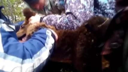 Russia: Friendly Arkhangelsk hunters rescue helpless bear cub