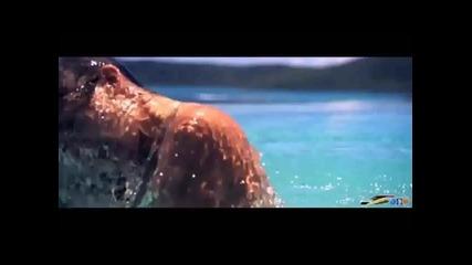 Offer Nissim ft. Maya Simantov - Divine (fan Video)