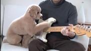 Пудел свири на китара със стопанина си!