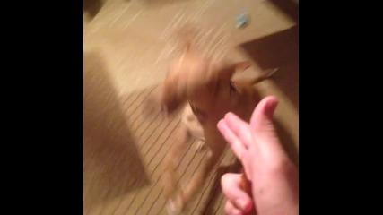 Застрелване на куче