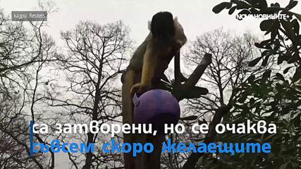Животните в лондонския зоопарк на лов за великденски яйца