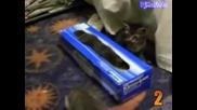 Компилация - 10 смешни момента на котки!