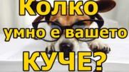 Колко умно е вашето куче