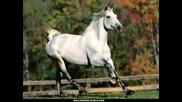 Удивително !!! Красотата и величието на Конете