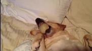 Кучешки Метод Против Хъркане