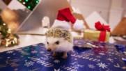 Сладко таралежче празнува Коледа