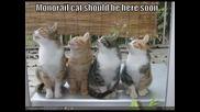 Funy pics na kotki