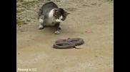 змия срещу котка,