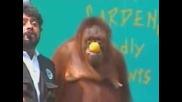 Маймуна Се Гаври С Човек