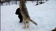 Кой каза, че не може да има приятелство между Вълк и Човек !?