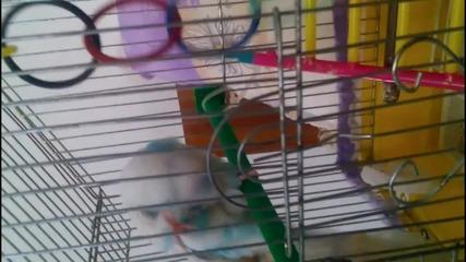 Моето умно папагалче