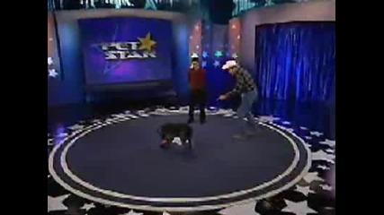 Кучето Уникат