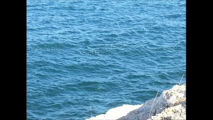 Красивото Северно Черноморие - Тюленово