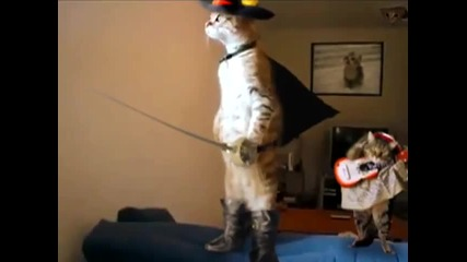 Истинският котарак в чизми !! (standing cat in boots)