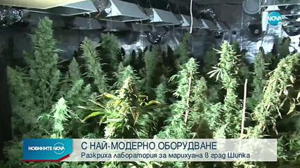 Разкриха модерна наркооранжерия в къща в Шипка