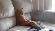 Котка седи на дивана като човек и гледа телевизия