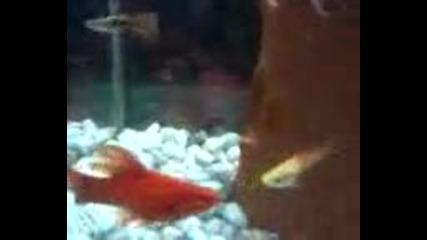 Риби тинейджъри