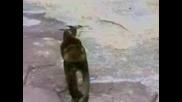 Маймунка се плаши от себе си - смях