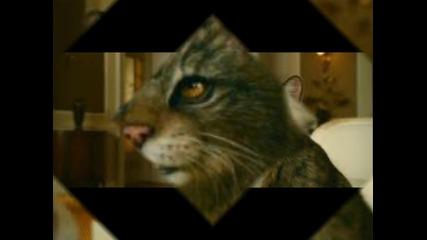 Панталаимон/ Пан от филма Златния компас