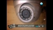 Издирва се питон, погълнал 30 котки - Здравей,България 08.08.2014