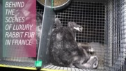 Fashion brands torture rabbits for fur