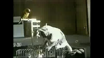 Папагал И Котка
