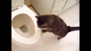 котка, заинтересована от тоалетната вода