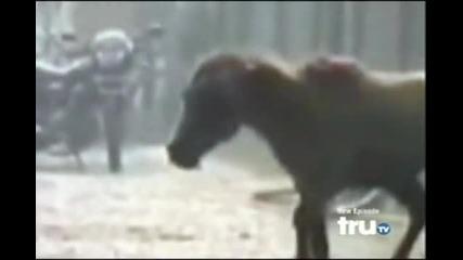 Animal Attack - Horse Attacks Guy in Retaliation (most Daring)