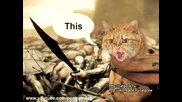 Коте изчезва с финес 4 Cat gone , Thriller Cat 4 - Sparta