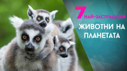 Най-застрашените животни на планетата