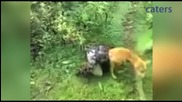 Стопанин спасява кучето си от смъртоносната прегръдка на питон !