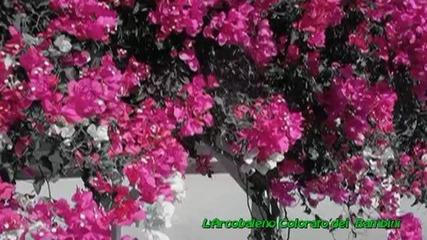 За да направите Цвете- Per Fare un Fiore by Gianni Rodari Sergio Endrigo (lo Zecchino D'oro)