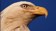 The Eagles - Hotel California- # Oфициално видео #