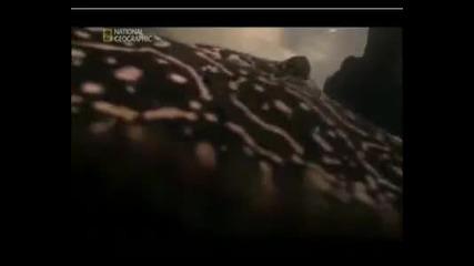 National Geographic-най - Опасните Животни На Света - Речния Скат Бг Аудио