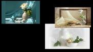 ✿♫ ♪ White Rose ... ... (music Giovanni Marradi) ✿ ♫ ♪