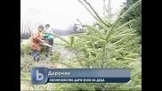Лесничейство дари елхи на деца