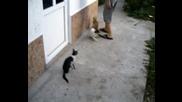 Creazy Kats