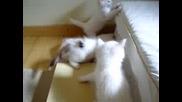 Малки Игриви Котенца - Много Сладки